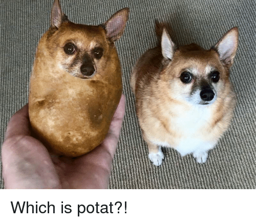 which-is-potat-26695318.png
